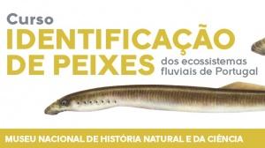 Curso de identificação de peixes dos ecossistemas fluviais de Portugal