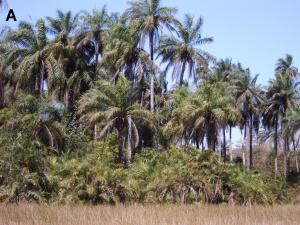 No Dia Internacional das Florestas, destaque para a investigação desenvolvida no cE3c