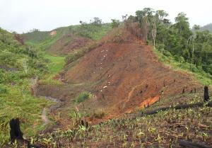 As florestas de Madagáscar estão em risco, mas as áreas protegidas da ilha demonstram estar a fazer a diferença