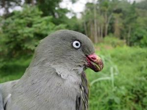 CNN dá destaque a investigação cE3c sobre o papel das aves na dinâmica das florestas de São Tomé e Príncipe