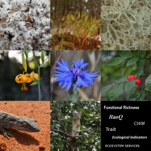 "Curso Avançado cE3c ""Hands on Functional Diversity: from Ecological Indicators to Ecosystem Services"" – últimos dias para aceitação das candidaturas"