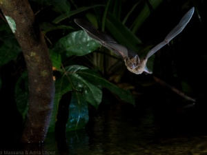 Does sex matter? For bats, it does