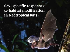 Machos e fêmeas de morcego respondem de forma diferente à modificação do seu habitat? Estudo é capa da revista Biotropica