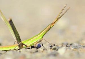 Guia permite conhecer os insetos e plantas das Estações da Biodiversidade de Mértola