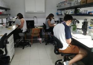"""Estudantes do ensino secundário foram cientistas durante uma semana: o cE3c na 5ª edição do Programa """"Ser Cientista"""" da FCUL"""