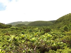 Investigadores do cE3c integram novo grupo IUCN de Especialistas em Plantas da Macaronésia