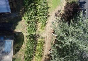 Solução para o problema da alimentação também passa pela agricultura urbana sustentável