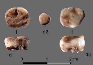 Sibéria: estudo genético revela novas evidências sobre ocupação humana da região ao longo dos últimos 31 mil anos