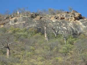 À descoberta da diversidade das florestas tropicais de África