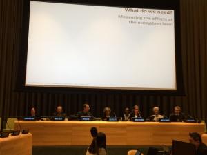 Investigadoras cE3c apresentam trabalho no 12º Fórum das Nações Unidas sobre Florestas