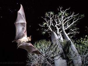 Estudo sobre biodiversidade dos morcegos é capa da revista científica Mammal Review