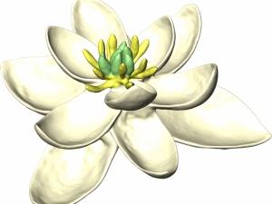 Novo estudo reconstrói a evolução das flores ao longo dos últimos 140 milhões de anos