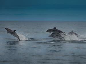 Estudar a distribuição geográfica dos cetáceos: é tudo uma questão de escala