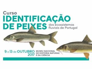 6ª edição do Curso de Identificação de Peixes dos Ecossistemas Fluviais de Portugal, com formadores cE3c – inscrições até 4 de outubro