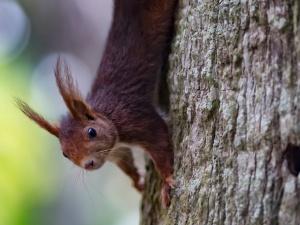 cE3c apoia Concurso Anual de Fotografia em História Natural e Ciência, organizado pelo MUHNAC