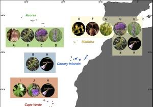 Novo estudo explora as relações filogenéticas entre espécies nativas e endémicas da família de plantas Campanulaceae na Macaronésia
