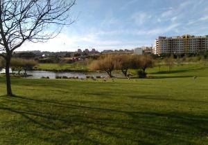 O tipo de vegetação dos parques urbanos e a sua manutenção determinam como os parques urbanos contribuem para melhorar o ambiente das cidades