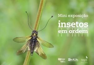 """Mini-exposição """"Insetos em Ordem"""" chega à Biblioteca de Marvila, em Lisboa"""
