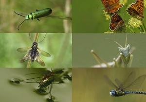 """Exposição """"Insetos em Ordem"""" dá origem a aplicação de telemóvel para identificação de insetos"""