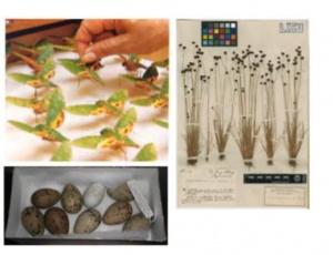 """Curso Avançado cE3c """"Natural History Collections and Biodiversity"""": mudança de calendário"""
