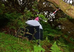 Novo artigo sobre monitorização de longo prazo de artrópodes nos Açores publicado em edição especial da Ecography