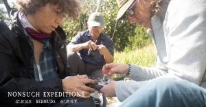 Freira-das-Bermudas, uma das espécies marinhas pelágicas mais ameçadas do mundo