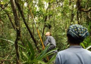 Novo estudo revela variações no uso de água em florestas costeiras da Mata Atlântica