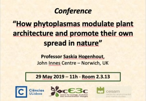 """Conference """"How phytoplasmas modulate plant architecture and promote their own spread in nature""""   May 29, FCUL"""