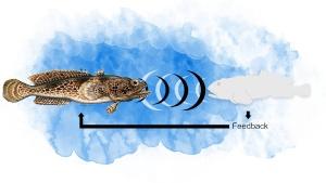 Comunicação nos peixes pode ser mais complexa do que se pensava
