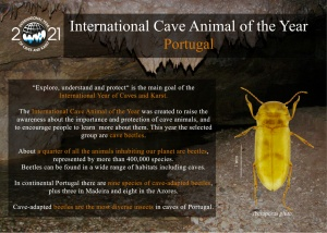 Cave Animal of the Year 2021 – Portugal