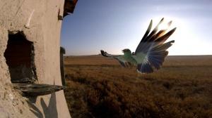 Colónias mistas de aves - João Gameiro